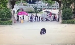 Police catch runaway chimpanzee who escaped from its enclosure in Chinese zoo