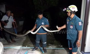 Python caught hiding in bathroom of Thai family home