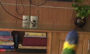 Birdie Bops Along to Favorite Song