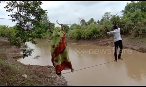 Indian villagers risk their lives by walking on rope above river to reach farmland
