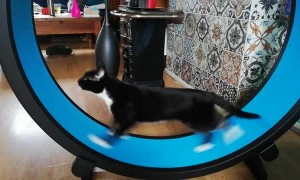 Cat Runs Like Crazy