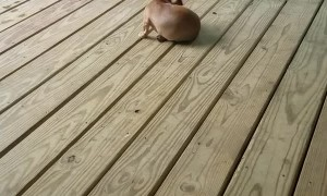 Puppy Plays Tag with Itself