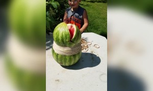 Crazy Watermelon Experiment Goes Wrong