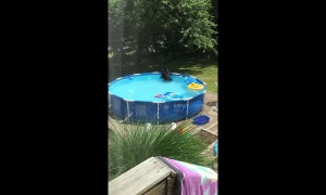 Connecticut mother catches black bear playing with toys in plastic pool