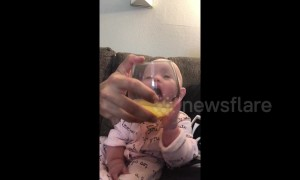 California baby really wants a drink of dad's mimosa