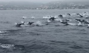 Witnessing Dozens Upon Dozens of Dolphins
