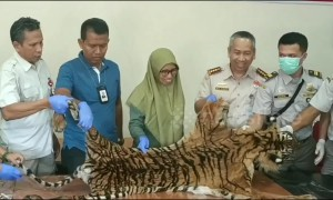Indonesian government officials intercept package containing tiger skin at airport