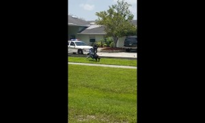 Florida man tries to flee cop car on BICYCLE, face-plants and gets tased