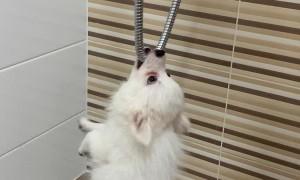 Shower Is Puppy's Sworn Enemy