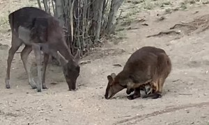 Drought Brings Unlikely Friends Together