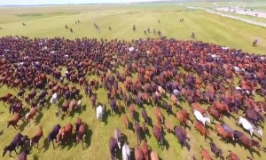 Drone footage captures thousands of horses galloping across grasslands at Xinjiang tourism festival