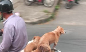 Riding Along with Puppy Dog Passengers