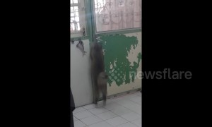 Clever cat opens door by herself