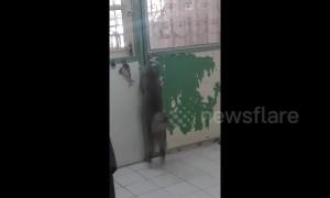 Clever cat opens door by herself
