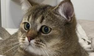 Kitty Steps in Sticky Doorway Trap