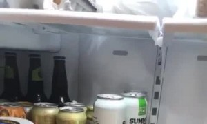 Bird Throws Fruit From the Fridge