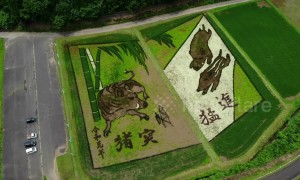 Japan rice paddy art celebrates new imperial era of Reiwa