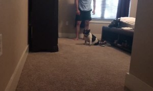 Paralyzed Pup Starts Using His Back Legs Again