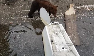 Baby Bears Play by Plane