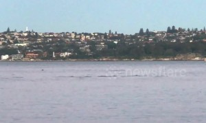 Pod of dolphins spotted swimming off Sydney's harbour