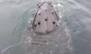 Unbelievable up-close encounter with Humpback Whale