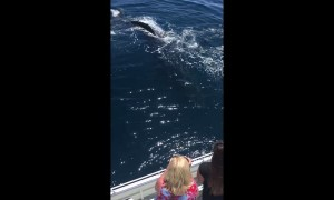 Whales Wave Hello