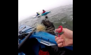 Heartwarming moment American kayaker rescues seal trapped in fishing line in Namibia
