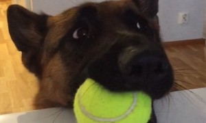 Dog hilariously lets owner know that he's ready for playtime