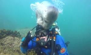 Curious Seal Investigates Diver
