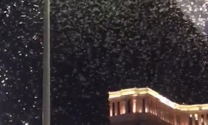 Massive Grasshopper Migration