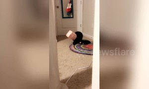 Newsflare Edit: Cat staggers about after getting head stuck in a bag
