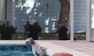 Timid Bird Tries Some Pool Time