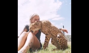 This cheetah is friendlier than your cat