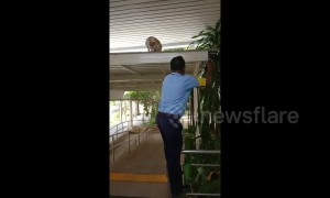Kind security guard helps cat down from the roof by letting it climb on his shoulder