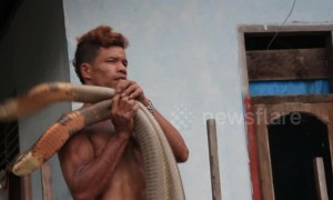 Brave Indonesian snake handler goes viral for manhandling muscly cobras
