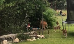 Five Fawns Having Some Frolicking Fun