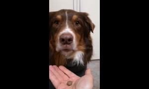 Who's a clever boy? Dog learns when to refuse a treat and when to eat it