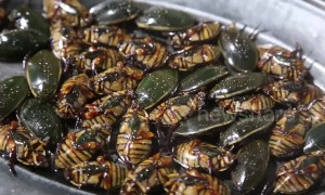 Chinese restaurant serves steamed cockroaches as snacks for customers