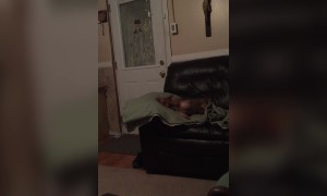 Chihuahua Talks Back