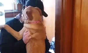 Dog's emotional reaction after not seeing owner for 2 months