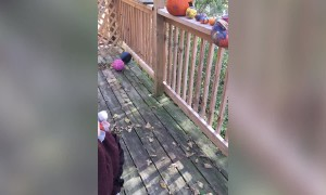 Little Girl Thought Pumpkin would Stay Good Forever – LOL