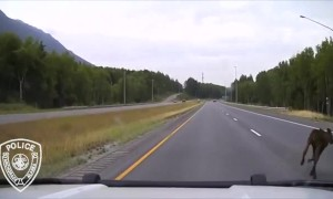 Patrol car nearly crashes into crossing moose