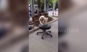 Dog spins on swivel chair while tied to tree in China's Changchun
