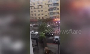 Large tree collapses onto moving car after rainstorm hits China's Changchun