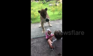 Lioness attempts to attack siblings through glass at New Orleans zoo