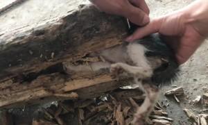 Kitten Stuck Head First in Hollow Log