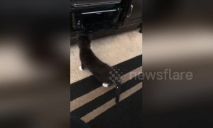 Adorable kitten jumps back in fear of printer