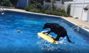 Dog amazingly jumps onto floating body board to fetch ball