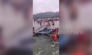 Rescuers and tourists team up to save stranded dolphin on beach in China's Yangjiang