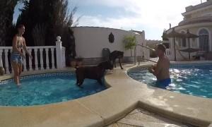 Doggo's Favourite Bouncing Ball Game